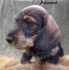Bismarck-vom-alten-Friedrich-FCI