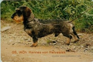 Hannes-von-Helvesiek