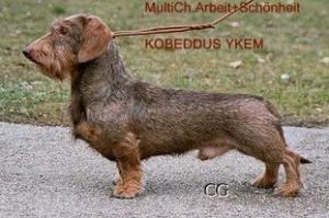 Kobeddus-Ykem
